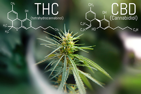 Overview of THC and CBD